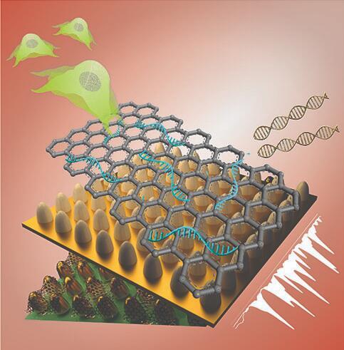 这种新型生物传感器可表征不同类型的干细胞