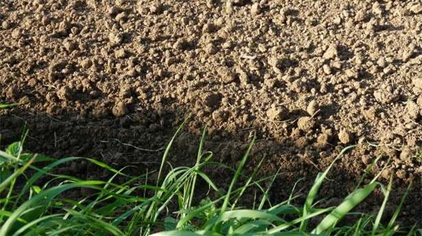 本古里安大学开发可提高农业生产率的新型实时土壤硝酸盐传感器