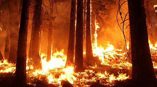 纳米摩擦发生器或在森林火灾风险预警传感器中发挥重要作用.png