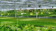 农业物联网助力传统农业升级,实现智能化