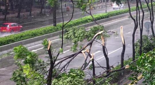 倾角传感器在香港树木倾斜安全监测中的应用