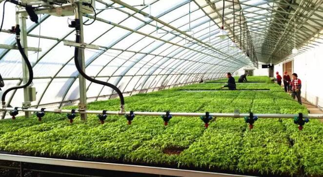农业传感器技术用于香瓜种植中