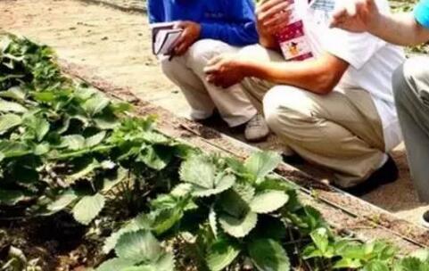 传感器技术用于北京灌溉节水基地的监测研究应用中