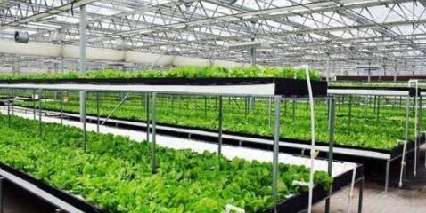 传感器助国内首个智能型LED植物工厂实现智能化管理