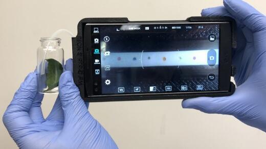 新型手机传感器可有效监测农作物病害