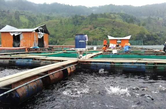 振动传感器技术帮鱼虾养殖户解决过度喂食问题