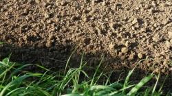 新型实时土壤硝酸盐传感器 可帮助提高农业生产率