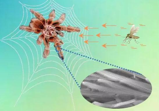 超灵敏柔性气流传感器可提醒盲人防止相撞