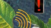 MIT研发新型碳纳米传感器 可监测植物健康状况