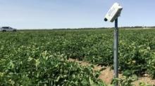 澳洲新型农业传感器可预测农作物7天的需水量