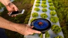 农业传感器的作用是什么?来看看吧!